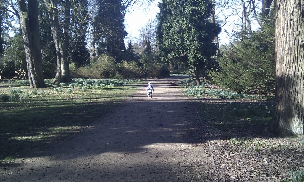A young boy runs down a woodland path.